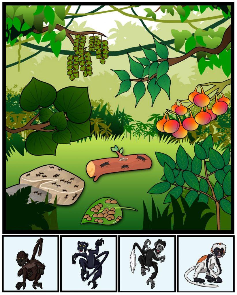 Illustrations Example